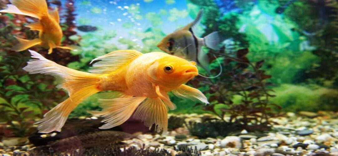 The 5 Best Epoxy Fish Tank Reviews of All Time