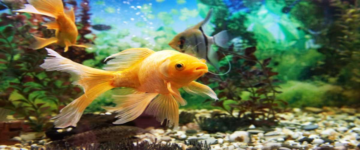 Epoxy Fish Tank