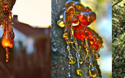 Resin: Definition, History, Types, Functions & FAQ