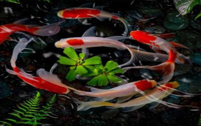 The 5 Best Epoxy Resin Koi Pond Reviews in 2021